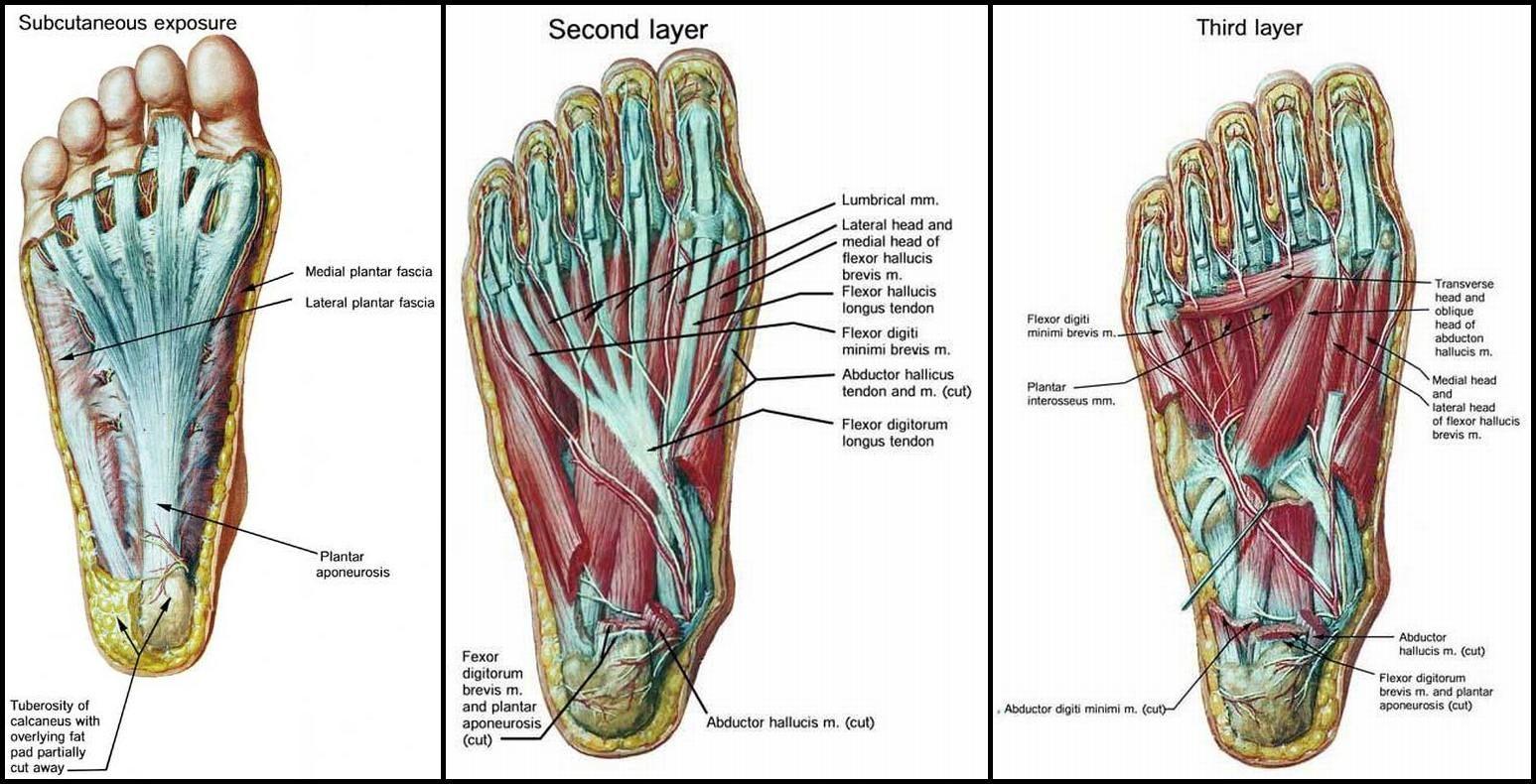 midocal a térd artrózisában