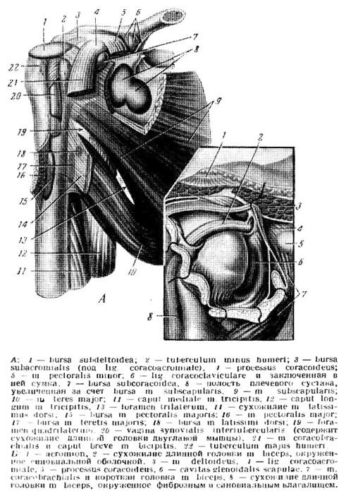 éles fájdalom a metatarsális phalangeális ízületben