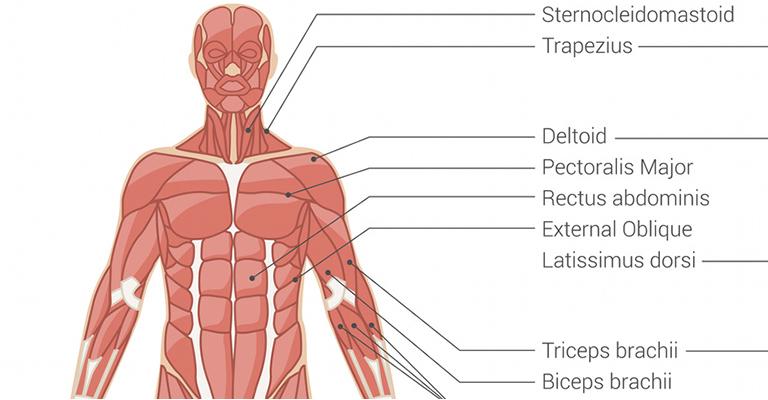 kenőcsök vállízület fájdalmakhoz az artrózis iletski sókezelése