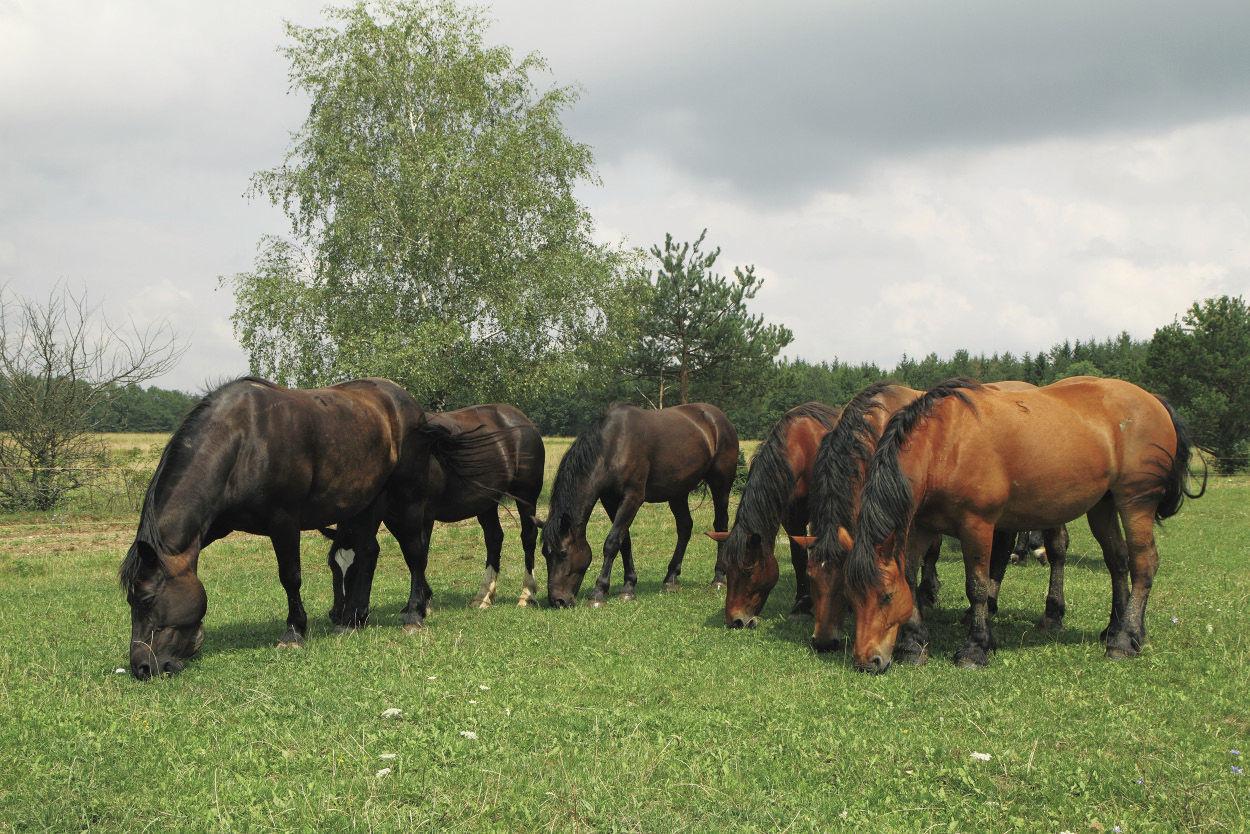 közös kezelés a lovak számára)