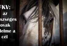 ló gél közös áttekintések