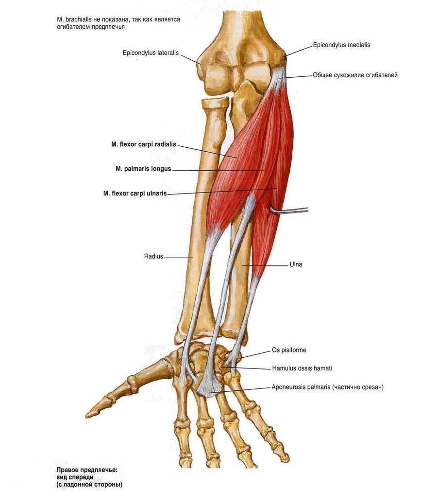 mi történik a vállízület artrózisával