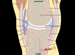 A térdfájdalom 11 leggyakoribb oka: Ezek okozhatják az ízületeinkkel való problémákat - Blikk Rúzs