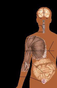 sclerosis multiplex és ízületi fájdalmak fájdalom a bal csuklóban