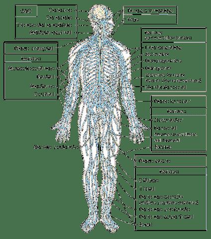 szomatikus ízületi betegségek)