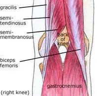térd térségében lévő ligamentum törése