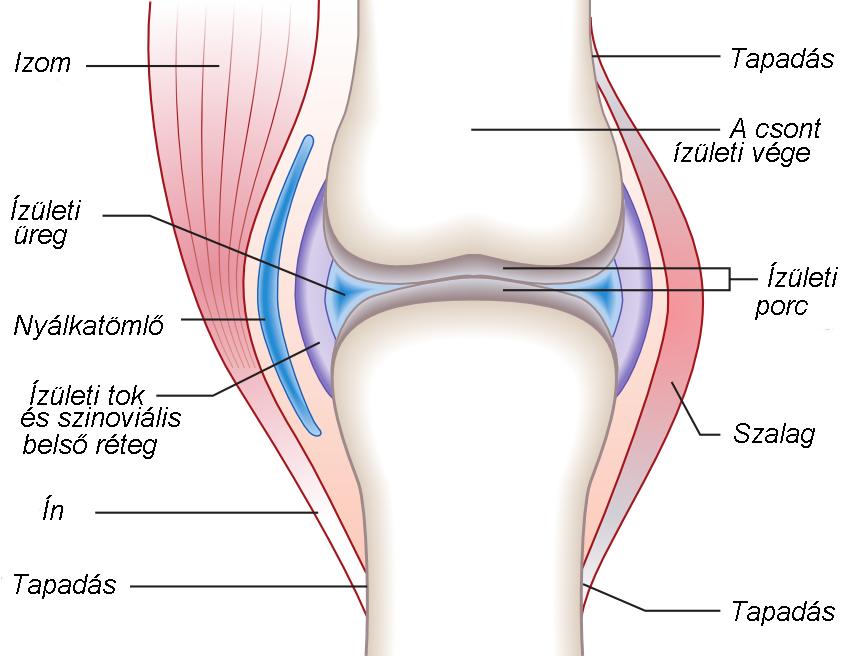 térdízület ízületi gyulladásos tünetei