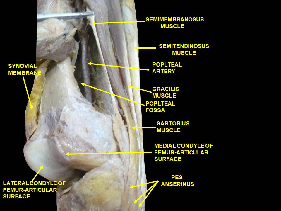 csípőizületi gyulladás lelki okai fájdalom a váll karjainak ízületeiben hogyan kell kezelni
