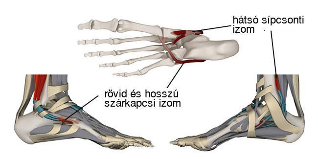 Fájdalom a lábak ízületeiben rákkal, Pajzsmirigy-alulműködés