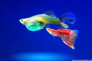 közös kezelés friss halakkal