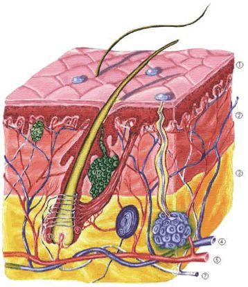 kötőszövet porc arcfájdalom a láb ízületeiben