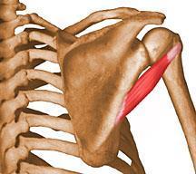 Reumatológia, ortopédia jegyzet   demonstudio.hu