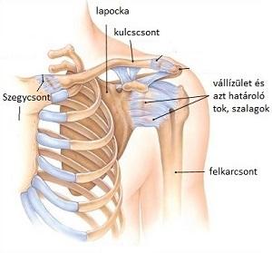 Kapor ízületi gyulladás esetén - Sport ízületi fájdalom