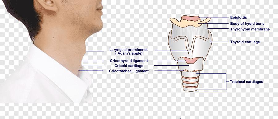 kricoid artritisz