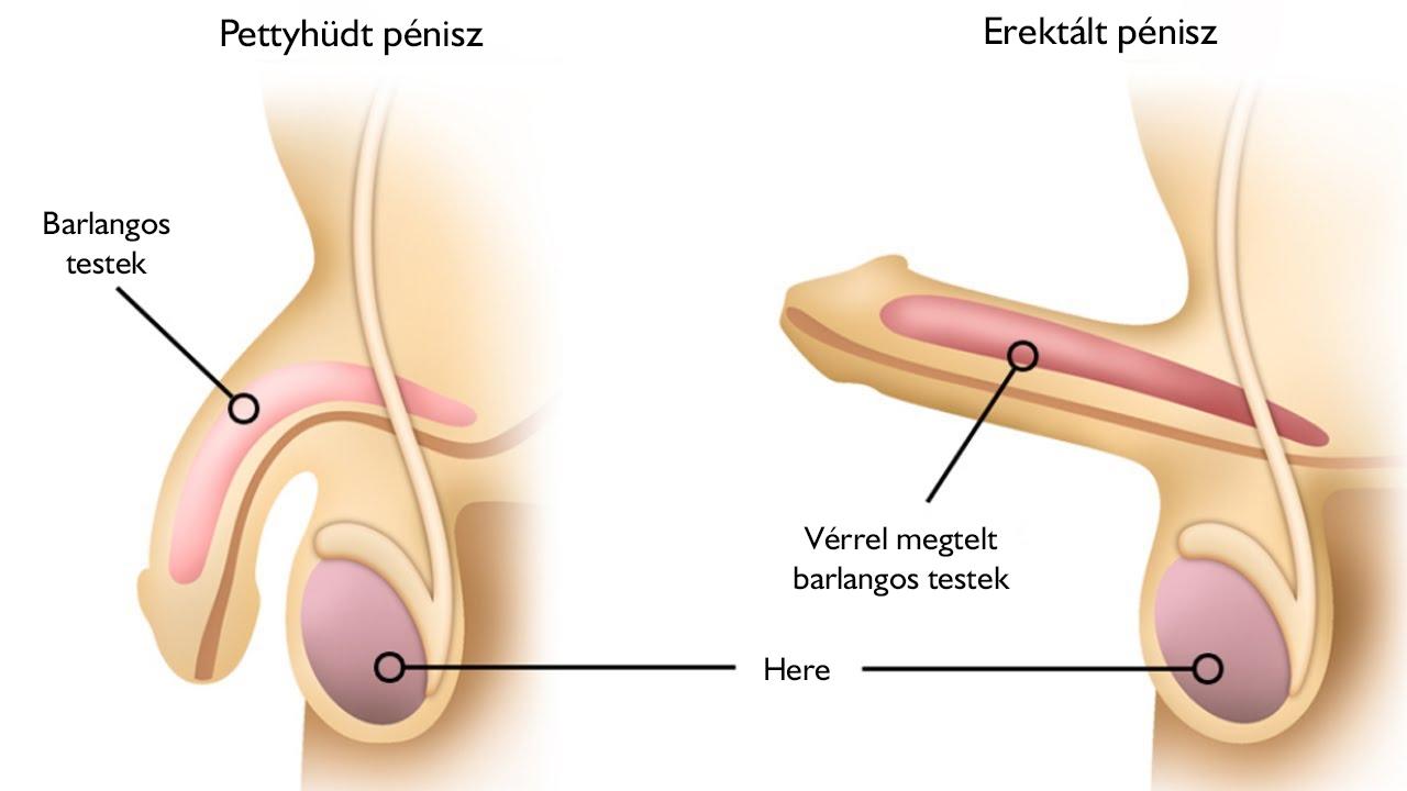 ízületi fájdalom urológia