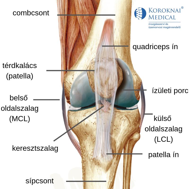 térdízületi fájdalom artrózis kezelése glükózamin kondroitin különbség
