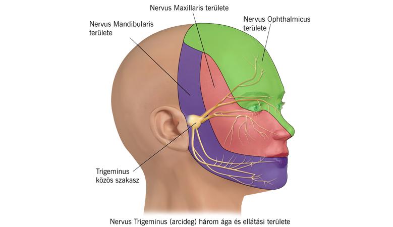 közös kezelés a kamenogorszki szájban lábfej törés
