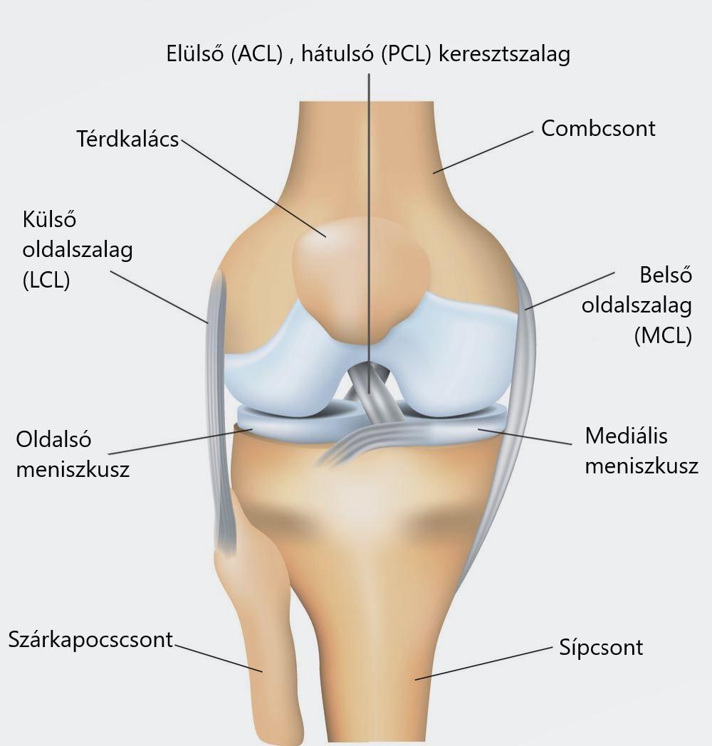 A térdízületek meniszciáinak károsodása informatív, A femoralis condyle törés diagnózisa